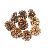 Lot de 10pommes de pin naturelles AsentechUK® - Idéales pour la décoration de Noël, du nouvel an, d'une fête, marron, 2-3cm