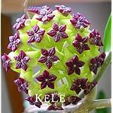Bloom Green Co. ¡¡Límite de tiempo!!Bonsai verde Hoya, Flores en maceta, Flor de Hoya Carnosa Plantas de jardín Bricolaje Jar