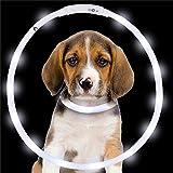 GR Weiß USB wiederaufladbare LED Leucht Hundehalsband wasserdicht einstellbar blinkend glühen