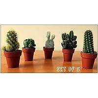 Set of 5 Cactus in 5.5cm Pot