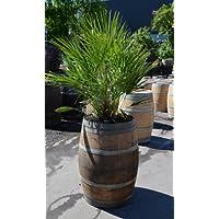 Pflanzkübel, Pflanztrog, groß, winterfest aus Weinfass, Temesso-Fass aus Holz D70 H95cm für grosse Pflanzen/Palmen/Bananen - 225 Liter !