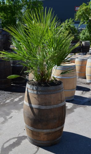 Temesso Pflanzkübel, Pflanztrog, groß, Winterfest aus Weinfass, Fass aus Holz D70 H95cm für Grosse Pflanzen/Palmen/Bananen - 225 Liter ! - Mahagoni-fass