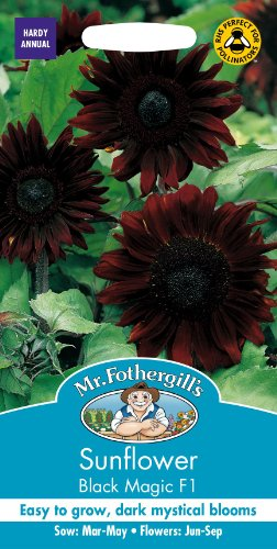 Mr Fothergills Pilzsporen, Blume, Sonnenblume schwarz Magic F1 20 Samen -