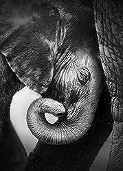 PICSonPAPER Hochwertiges Poster Elefantenbaby, 50 cm breit x 70 cm hoch, Dekoration, Kunstdruck, Wandbild, Fineartprint, Wandposter Elefant, Baby, Kind, schwarz Weiss