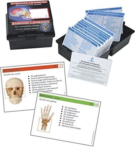 Das menschliche Skelett: Anatomie-Lernkarten Knochen, Bänder und Gelenke