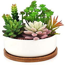 Maceteros de vidrio para cactus