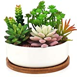 Succulent Planter, INNOTER Modern White Ceramic Cactus Flower - Best Reviews Guide