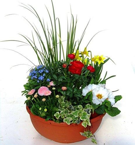 Shopping - Ratgeber 517%2BP0m6RxL Frühlingsdeko - Zeigen Sie Freude am Frühling