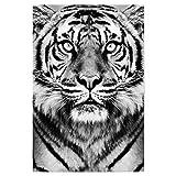artboxONE Poster 30x20 cm Tiger in BW von Künstler Sisi and SEB