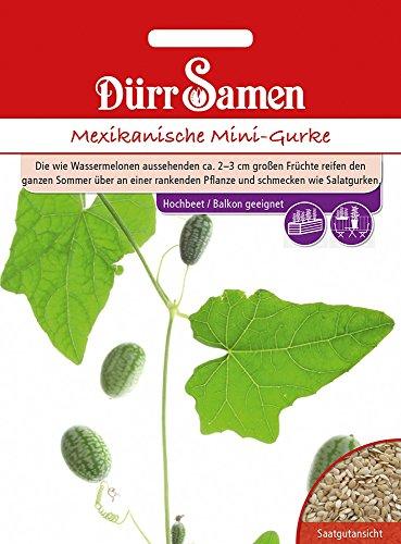 Dürr-Samen Mexikanische Mini-Gurke (Wassermelonen-gurken Samen)
