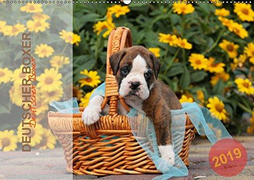 Deutscher Boxer 2019 (Wandkalender 2019 DIN A2 quer): Jahreskalender 2015 mit 13 Fotos der Hunderasse Deutscher Boxer (Monatskalender, 14 Seiten ) (CALVENDO Tiere)