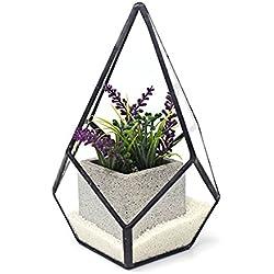 Ultra Diamond Teardrop Terrarium 12x12x17cm Premium Qualität Glas Terrarium Diamond Teardrop Terrarium mit einem Cut-off Rand ideal für Moos und Pflanzen oder Dekorationen