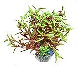 1 künstliche Pflanze für Ihr Aquarium, grün/braun