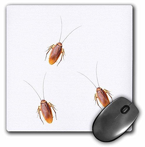 scarafaggi-immagine-di-scarafaggi-su-uno-sfondo-bianco-mouse-pad-8da-203cm-mp-220052-1