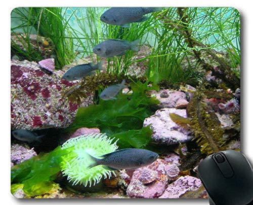 Mauspad groß, Mandarinfish-Motiv mit voller Persönlichkeitsmaus -