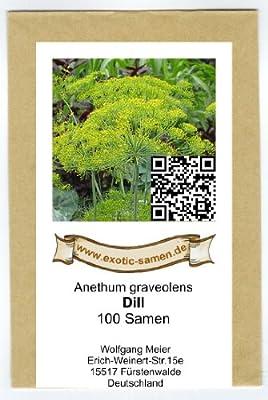 Dill - Anethum graveolens (100 Samen) von exotic-samen - Du und dein Garten