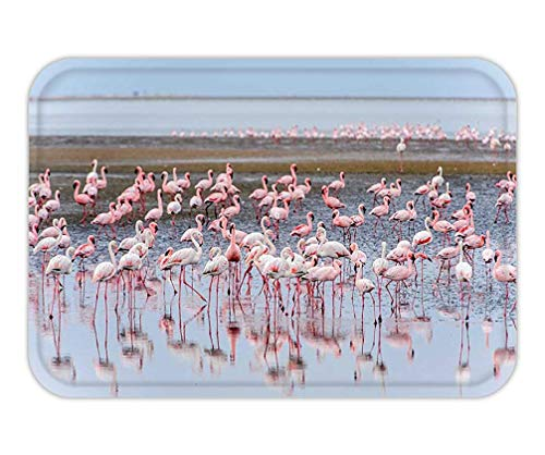 CHKWYN Doormat Flock of Flamingos at walvis Bay Namibia 15.7X23.6 Inches/40X60cm Lace-up-bay