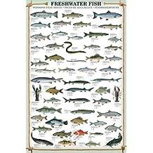Empire merchandising 648969 Educational Fresh Water Fish de peces de agua dulce de educación de aprendizaje de póster