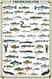 empireposter - Educational - Freshwater Fish - Größe (cm), ca. 61x91,5 - Poster, NEU - Text in Englisch