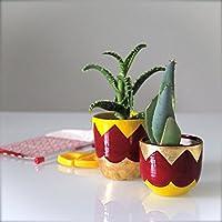 Coppia vasi per piantine grasse, decorati a mano con foglia oro