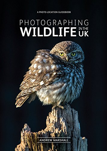 Photographing Wildlife in the UK - where and how to take great wildlife photographs