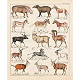 Meishe Art Vintage Poster Print Art Wild Animals Kollektion Ziege Schaf Antelope Pferd Zebra Biologie Zuordnung Referenz Diagramm Diagramm Wanddekoration Bild