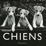Image de Chiens