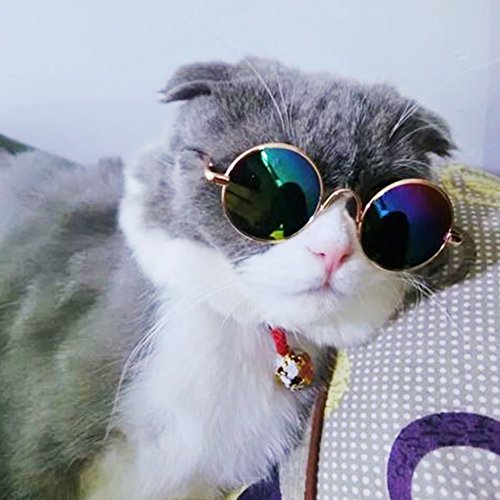 Tookie Sonnenbrille für Haustiere, Katzenbrille, lustige Kätzchen, Mehrfarbig