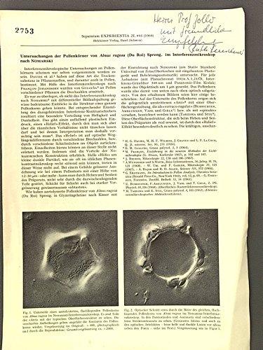 Untersuchungen der Pollenkörner von Ainus rugosa (Du Roi) Spreng, im Interferenzmikroskop nach NOMARSKI.