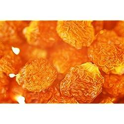 Physalis Trockenfrüchte, schön Sauer und Vitaminhaltig, zum Naschen, ohne Schwefel, ohne Zuckerzusatz, 600g
