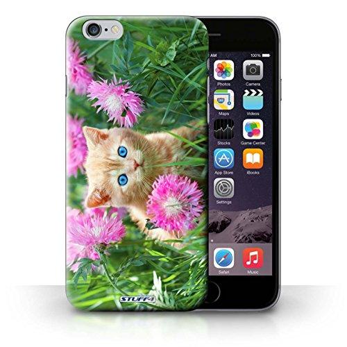Kobalt® Imprimé Etui / Coque pour iPhone 6+/Plus 5.5 / Blanc et moelleux conception / Série Chatons mignons Jardin