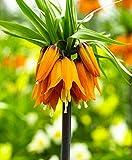 10 pcs/sac Couronne Imperial Seeds 9 couleurs fritillaire impériale Graines de couverture végétale Bonsai Graines de fleurs Pot plante jardin 1