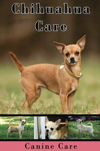 Chihuahua Care: The Complete Guide to Caring