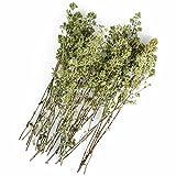Original Italienischer Bio Oregano aus Sizilien (ganze Blüten) an Zweigen Oreganozweige getrocknet 25g (ideal auch für Präsentkörbe)