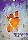Faszination am Riff (Wandkalender 2015 DIN A4 hoch): Bunte Unterwasserwelt (Monatskalender, 14 Seiten) (CALVENDO Tiere)
