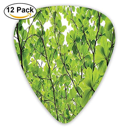Close-up Tree Leaves From An Uprising Angle High Plants Summer Fresh Environment Habitat Guitar Picks 12/Pack