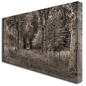 Sepia forest landscape sceney kunstdruck auf leinwand gro - Leinwand amazon ...