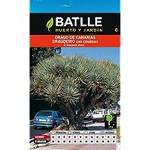 Semillas Batlle 098002BOLS - Drago de Canarias