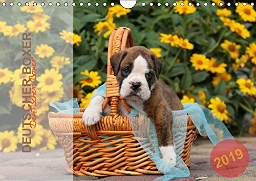 Deutscher Boxer 2019 (Wandkalender 2019 DIN A4 quer): Jahreskalender 2015 mit 13 Fotos der Hunderasse Deutscher Boxer (Monatskalender, 14 Seiten ) (CALVENDO Tiere)