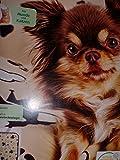 Grande couverture douce pour animal domestique 100x 70cm Couverture pour chien Beige