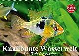 Knallbunte Wasserwelt. Die Welt der Fische (Wandkalender 2019 DIN A2 quer): Die bunte Welt der Fische und Wasserbewohner (Geburtstagskalender, 14 Seiten ) (CALVENDO Tiere)