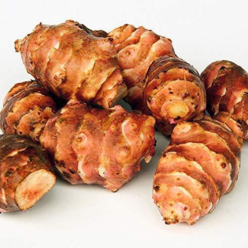 Xianjia Garten - Rrität Topinambur Samen Bio Helianthus tuberosus,Delikatess-Gemüse mit feinem nussigen Geschmack,gemüsesamen außergewöhnlich Winterhart für balkon (20)