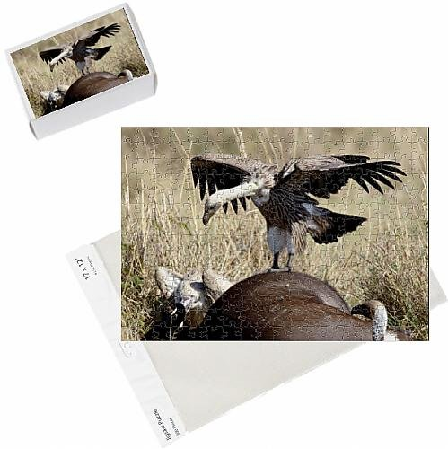photo-jigsaw-puzzle-of-immature-african-white-backed-vulture-gyps-africanus-atop-a-cape-buffalo