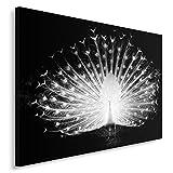 Feeby Frames, Tableau Seul Panneau, Tableau imprimé XXL, Tableau imprimé sur Toile, Tableau Deco, Canvas 60x80 cm, Oiseaux, Paon, Noir ET Blanc