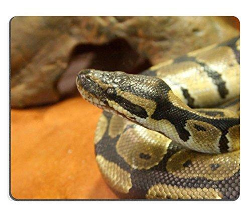 Jun XT Gaming Mousepad Bild-ID: 27220580Ball Python Python regius (Python Basis)