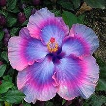 Amazon Es Flores Exoticas