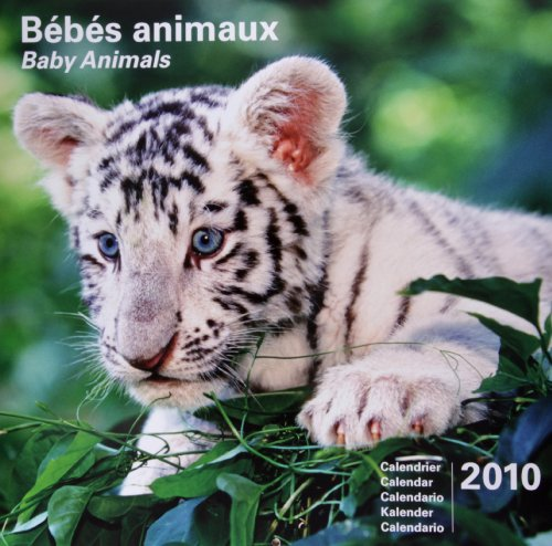 2010 Baby Animals 30 X 30 Calendar par JNF