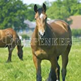 Kiepenkerl Country Horse 2120 Pferdeweide Balance - 10 kg, Rasensamen, Rasensaat