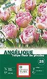 Ernest TURC Pack de 25 Bulbes Tulipe Angélique Rose Pale Très Doux 13,5 x 7 x 23 cm 107586