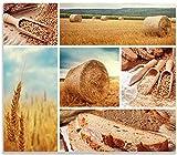 Herdabdeckplatte / Spitzschutz aus Glas, 1-teilig, 60x52cm, für Ceran- und Induktionsherde, Weizen und Mehl Vom Korn zum Brot